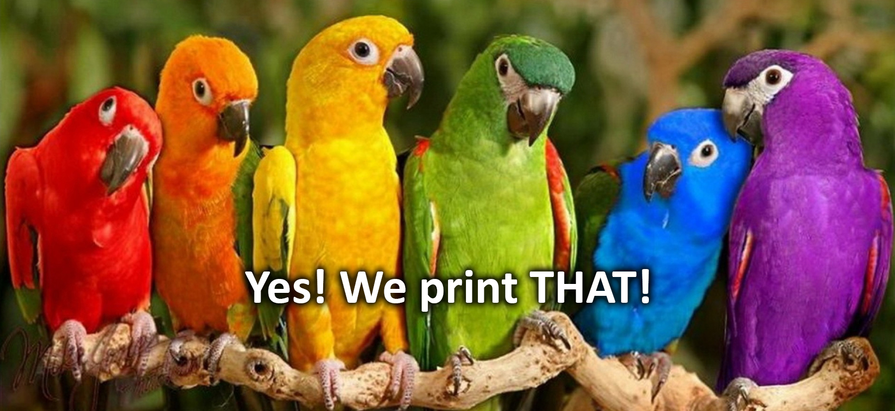We Ink Everything…Well almost. Since 1932, Cann Printing has been producing the highest quality printing. Attention to every detail results in flawless craftsmanship. The greatest service provides customer confidence. See why our customers stay with us for decades. Cann is the art of fine printing!